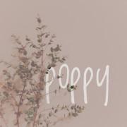 poppyさん