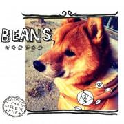 beans_net_comさん